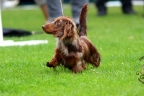 Hondenshow Limburgia 2017 127n