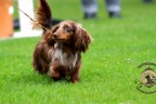 Hondenshow Limburgia 2017 130n