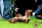 Hondenshow Limburgia 2017 149n