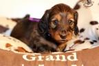 Puppies Zorka 9 weken Bella 4 weken 277-1