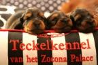 Puppies zorka&sebi8 bella&sebi3 604-1