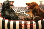 Puppies zorka&sebi8 bella&sebi3 805-1