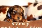 Puppies Zorka 9 weken Bella 4 weken 054-1
