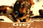 Puppies Zorka 9 weken Bella 4 weken 062-1
