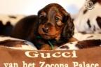 Puppies Zorka 9 weken Bella 4 weken 126-1