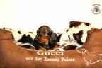 Puppies Zorka 9 weken Bella 4 weken 144-1