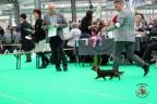 Dogshow Bleiswijk 2017 1-158