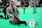 Dogshow Bleiswijk 2017 1-256
