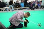 Dogshow Bleiswijk 2017 dag2 1-042