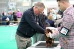 Dogshow Bleiswijk 2017 dag2 1-098