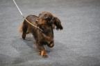 Int dogshow Luxemburg 2017 147