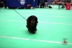 Dogshow Maastricht 2 dagen 2017 1 - 031