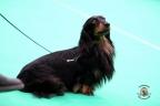 Dogshow Maastricht 2 dagen 2017 1 - 085