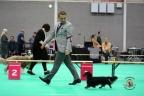 Dogshow Maastricht 2 dagen 2017 1 - 088