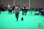 Dogshow Maastricht 2 dagen 2017 1 - 117