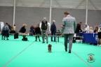 Dogshow Maastricht 2 dagen 2017 1 - 215