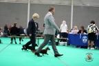 Dogshow Maastricht 2 dagen 2017 1 - 242