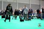 Dogshow Maastricht 2 dagen 2017 1 - 268