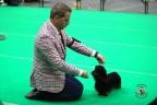 Dogshow Maastricht 2 dagen 2017 1 - 314