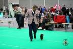 Dogshow Maastricht 2 dagen 2017 1 - 340