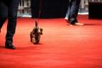 Martini Dogshow en afscheid puppies Zorka 232