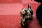 Martini Dogshow en afscheid puppies Zorka 257