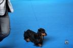 San Marino dogshow 2017 1-268