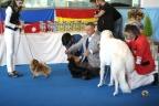 San Marino dogshow 2017 1-292
