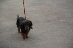 Hondenshow Avignon 2014-St Tropez 395
