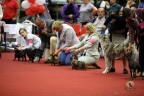 Hondenshow Genk juni 2017 139n