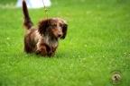 Hondenshow Limburgia 2017 095n