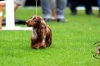 Hondenshow Limburgia 2017 128n