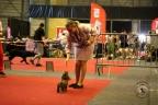 Dogshow Lommel juni 2017 1-148