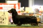 Dogshow Lommel juni 2017 1-429